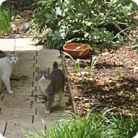 Adopt A Pet :: *MIKE - Winder, GA