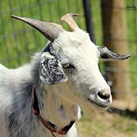 Adopt A Pet :: Mr Tumnus - Mead, WA