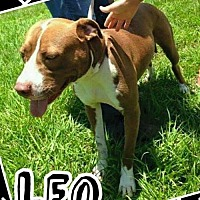 Adopt A Pet :: Leo - Lake Placid, FL