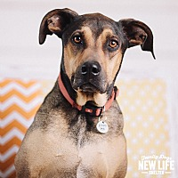 Adopt A Pet :: Cee Lo - Portland, OR
