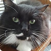 Adopt A Pet :: Star - Witter, AR