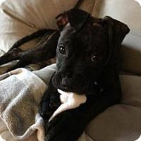 Adopt A Pet :: Hossa - Villa Park, IL