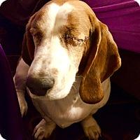 Adopt A Pet :: Nya:loves petting! (PA) - Spring City, TN