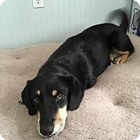 Adopt A Pet :: Lottie - Columbus, OH