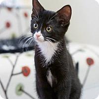 Adopt A Pet :: Pepe - Marietta, GA