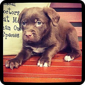 Retriever (Unknown Type) Mix Puppy for adoption in Grand Bay, Alabama - Fielder