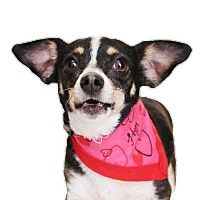 Adopt A Pet :: Merryweather - Chico, CA
