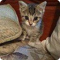 Adopt A Pet :: BIANCA (BETTE BABY(BACI)) - Hampton, VA