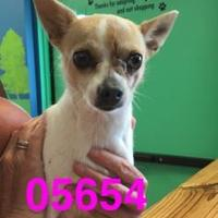 Adopt A Pet :: MIA - Kiln, MS