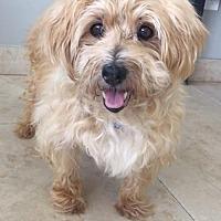 Adopt A Pet :: Palmer - Weston, FL
