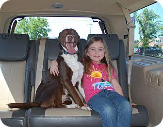 Labrador Retriever Mix Dog for adoption in Hagerstown, Maryland - Jasmine