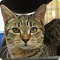 Adopt A Pet :: Tiny - Santa Monica, CA