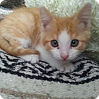Adopt A Pet :: Chester - Wenatchee, WA