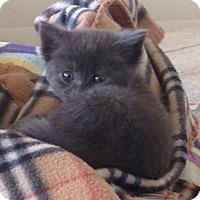 Adopt A Pet :: Grayford - Encinitas, CA