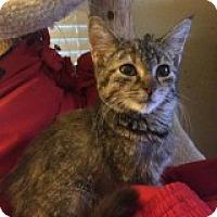 Adopt A Pet :: Angelica - Delmont, PA