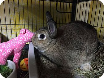 Dwarf Mix for adoption in Woburn, Massachusetts - Cheri