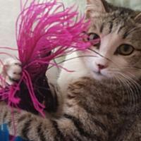 Adopt A Pet :: Orchid - Cerritos, CA