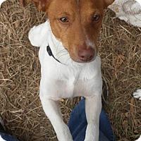 Adopt A Pet :: Baxter in Alexandria, LA - Austin, TX