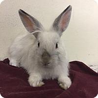 Adopt A Pet :: Ferris - Paramount, CA