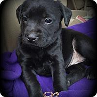 Adopt A Pet :: Reeses - Denver, NC