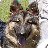 Adopt A Pet :: Margo AD 05-20-17 - Preston, CT