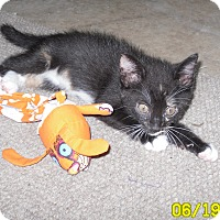 Adopt A Pet :: Hershey - Harmony, NC