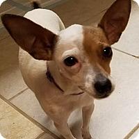 Adopt A Pet :: May - Sugar Grove, IL
