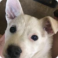 Adopt A Pet :: Rocket/CP - Columbia, TN