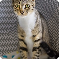 Adopt A Pet :: Isabella - Montclair, CA