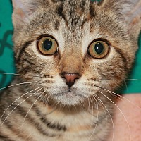 Adopt A Pet :: MARSHA - Clayton, NJ