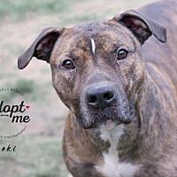 Adopt A Pet :: Loki - Bismarck, ND