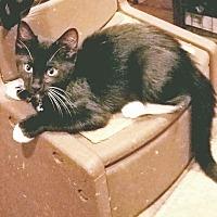 Adopt A Pet :: MORK - Hazlet, NJ