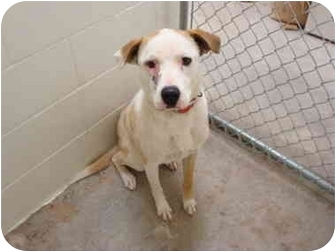 Terrier (Unknown Type, Medium) Mix Dog for adoption in Nichols Hills, Oklahoma - Daisy