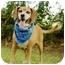 Photo 4 - Labrador Retriever/Hound (Unknown Type) Mix Dog for adoption in Portsmouth, Rhode Island - Manny