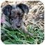 Photo 3 - Catahoula Leopard Dog/Dachshund Mix Puppy for adoption in Houston, Texas - Logan