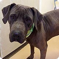 Adopt A Pet :: Bruno - Staunton, VA