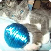 Adopt A Pet :: wee - Little Neck, NY