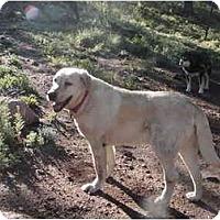 Adopt A Pet :: SARGE - Florissant, CO