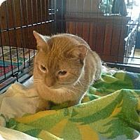 Adopt A Pet :: Henrietta - Bayonne, NJ