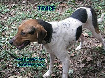 Hound (Unknown Type) Mix Dog for adoption in Huddleston, Virginia - Trace