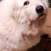 Adopt A Pet :: Zoe - Newnan, GA