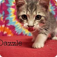 Adopt A Pet :: Dazzle - Melbourne, KY