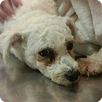Adopt A Pet :: Bogart - Coopersburg, PA