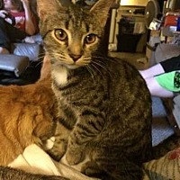 Adopt A Pet :: Munchie - Youngsville, NC