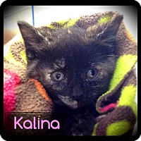 Adopt A Pet :: Kalina - Hartford City, IN