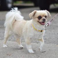 Adopt A Pet :: Gwendolyn - Madison, WI