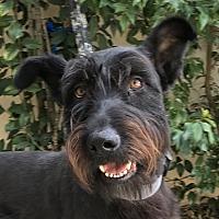 Adopt A Pet :: CHAMP - Corona, CA