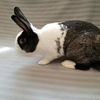 Adopt A Pet :: Buzz - Columbus, OH