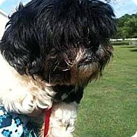 Adopt A Pet :: Chavelle - Southampton, PA