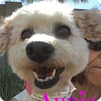 Adopt A Pet :: Annie - Scottsdale, AZ